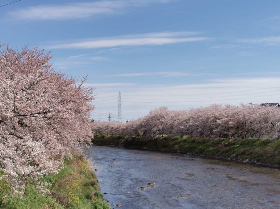 HUAWEI P30 Proで撮影した桜の写真