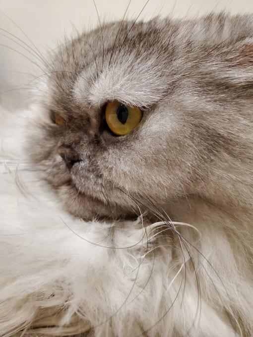 Galaxy Note10の接写テストで撮影した猫