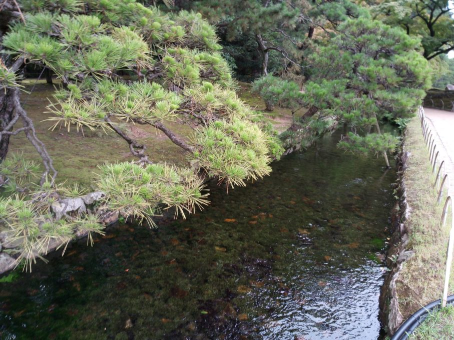 UMIDIGI A3 Proで撮影した川