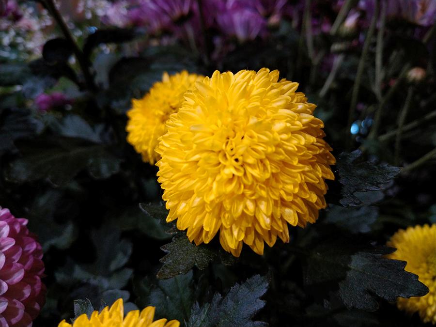 Xperia 8で実際に撮影した黄色い花