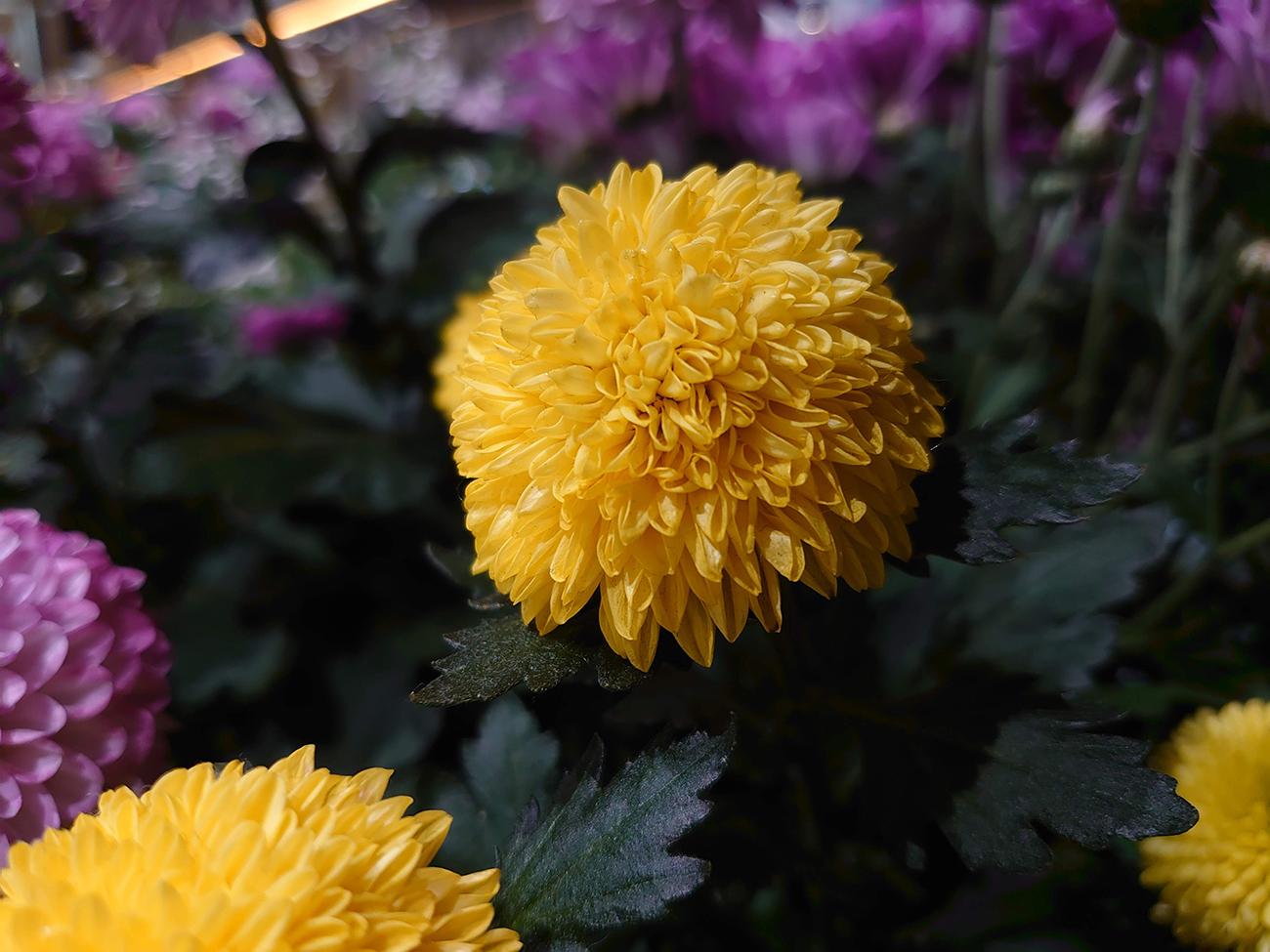 Xperia 5のカメラで撮影した花