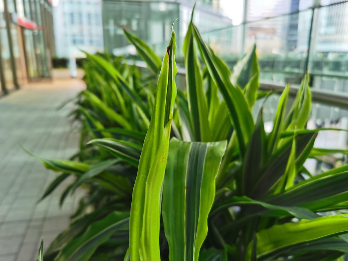 HUAWEI Mate 30 Proのカメラで撮影した緑の花