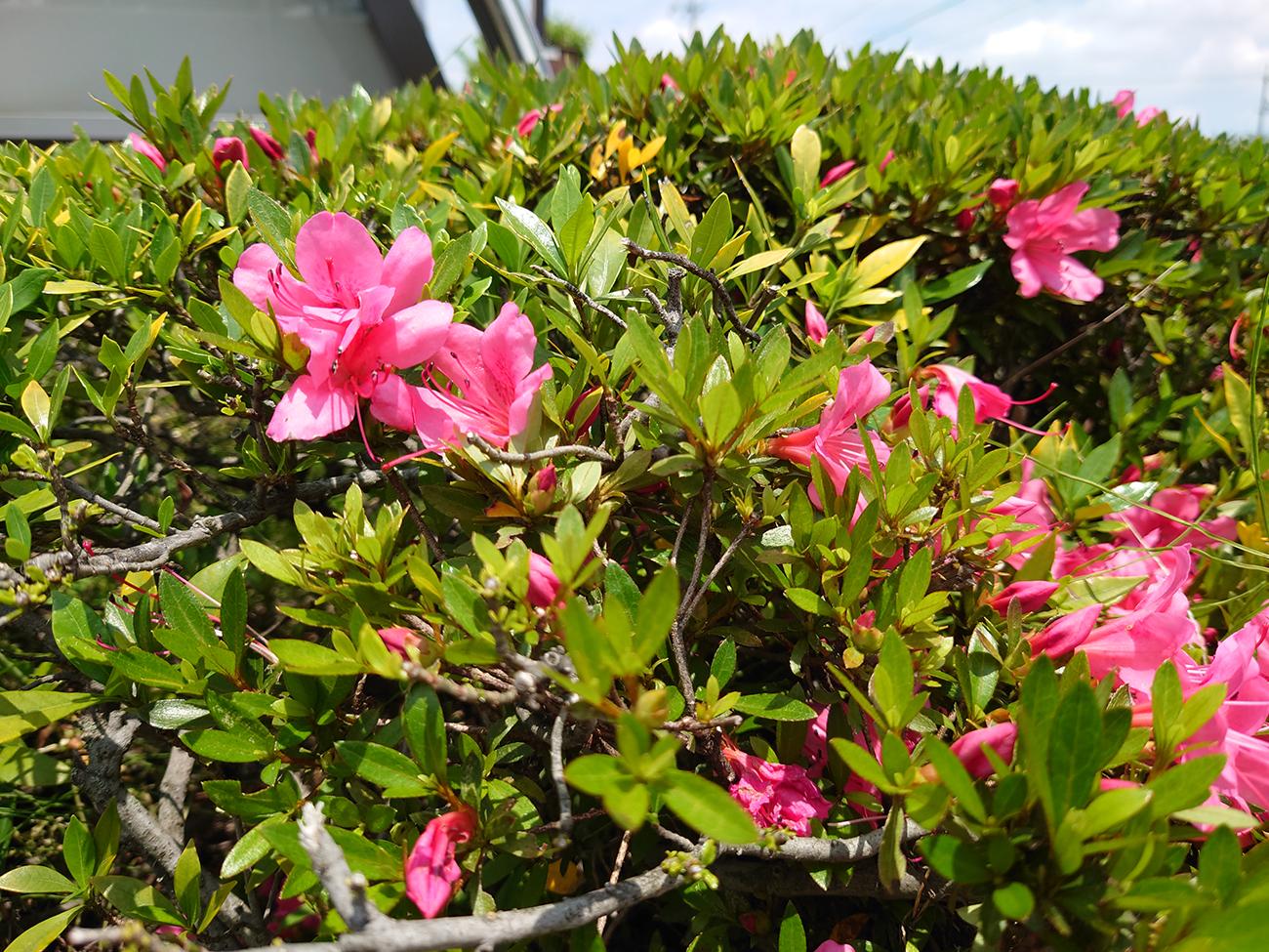 Xperia1iiで撮影した花