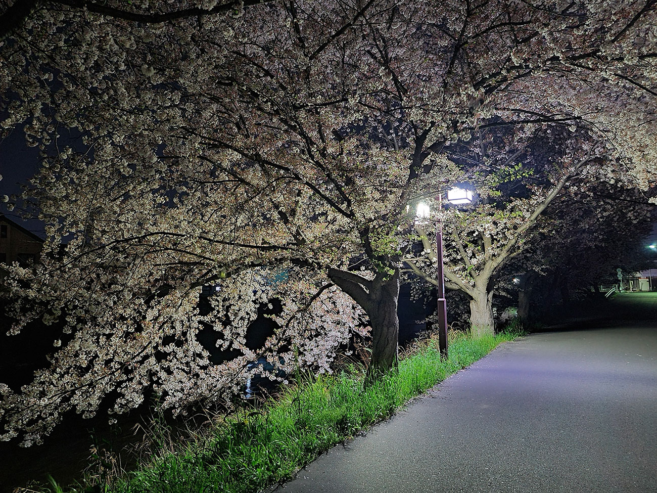 Galaxy S20Plusのナイトモードで撮影した夜桜