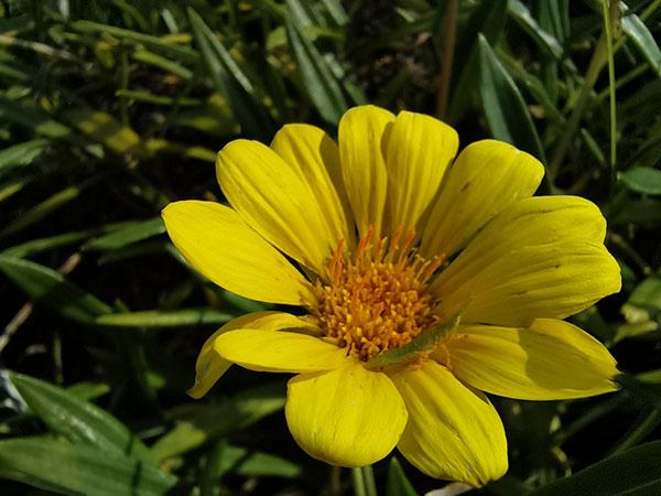 マクロカメラで撮影した花