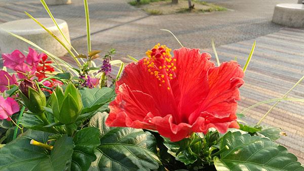 AQUOS sense3で撮影した赤い花